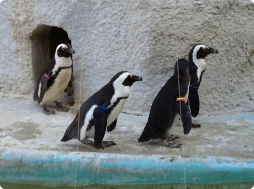 penguin_update05